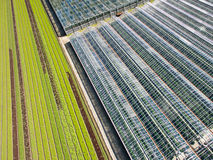 Aerial Agricultural View Of Lettuce Production Field And Greenho Stock Photography