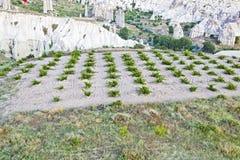 Aerial agricutlural crops Limestone Royalty Free Stock Photo
