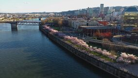 Aerial approaching cherry blossoms at the waterfront in Portland Oregon