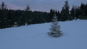 Aerial - Around the Christmas tree with lights placed on a snowy field in forest stock video