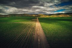 Aerial autumn view over vineyard fields in Europe. Aerial autumn view over vineyard in Europe stock photography