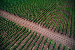 Aerial autumn view over vineyard fields in Europe. Aerial autumn view over vineyard in Europe royalty free stock image