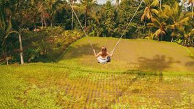 Aerial back view of woman on the swinging over beautiful rice fields background. Aerial back view of woman in white dress on the swinging over beautiful rice stock footage