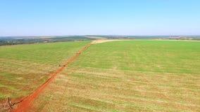 Aerial bean plantation in Sao Paulo state - Brazil stock video