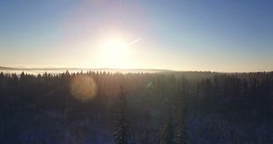 AERIAL. Beautiful smooth drone flight through and above fir trees covered by snow in early sunny morning. Sunrise sunbeam and len. AERIAL. Beautiful smooth drone stock video