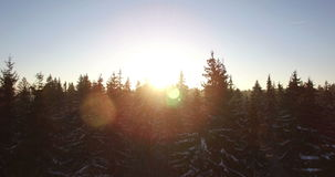 AERIAL. Beautiful smooth drone flight through and above fir trees covered by snow in early sunny morning. Sunrise sunbeam and len. AERIAL. Beautiful smooth drone stock footage