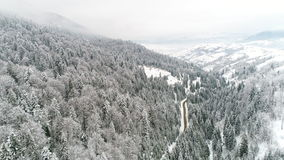 AERIAL: Car driving along the forest road in winter. Winter Carpatians nature, aerial view realtime snowfall, UHD 4K stock video