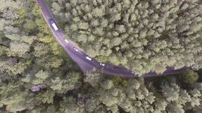 AERIAL: Car driving through pine forest. stock video footage