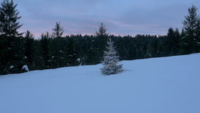 Aerial - Christmas tree with lights in the middle of a forest field stock video footage
