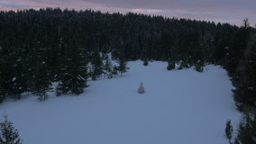 Aerial - Christmas tree placed on a snowy glade in forest stock video footage