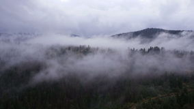 AERIAL: Cloud-shrouded trees. Fog over pine tree forest stock video footage