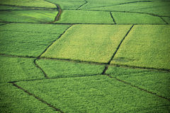 Aerial of crop fields. Stock Photography
