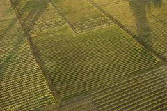Aerial of crops. Royalty Free Stock Images