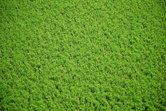 Aerial crops Stock Images