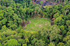 Aerial of  cut trees on ground in rainforest Stock Image