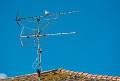 Aerial with Dove on Rooftop Royalty Free Stock Photography