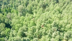 Aerial down view of European forest trees on a sunny summer day Royalty Free Stock Image