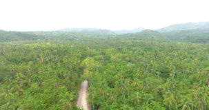 Aerial drone bird`s eye view video on palm forest with a long narrow road in the middle. tropical paradise pacific atoll. Islands. Top view. 4k stock footage