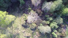 Aerial drone flight above rough field, trees and bushes in countryside. Multiple shades of green. Some treetops slightly undulate.