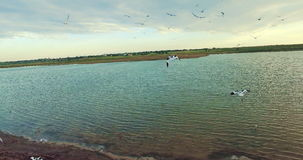 Aerial drone flight into lock of birds on the beach stock footage