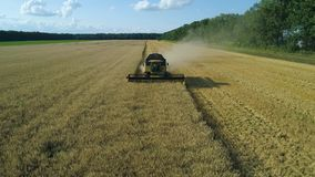 Aerial drone footage. Front view Combine Harvester gathers the wheat. Harvesting grain field. Beautiful natural aerial stock video footage
