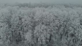 Aerial drone footage frozen trees in ice in the winter fog 4k stock video