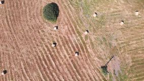 Aerial drone footage, hay bales on the meadow in Hungary stock video