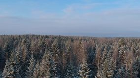 Rising view over snowy winter forest stock footage