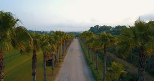 Aerial flight over rural road at sunset. Aerial drone footage over rural road at sunset in overcast weather with palm trees on the sides, camera moving down. DJI stock footage