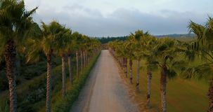 Aerial flight over rural road at sunset. Aerial drone footage over rural road at sunset in overcast weather with palm trees on the sides, camera moving forward stock video footage