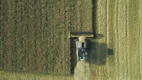 Aerial drone footage. Top view Combine Harvester gathers the wheat. Harvesting grain field. Beautiful natural aerial stock video footage
