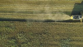 Aerial drone footage. Top view still shot of Combine Harvester gathers the wheat. Harvesting grain field. Beautiful stock footage