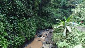 Aerial drone footage tropical river. Island Bali. Madakaripura Waterfall. East Java, Indonesia stock video