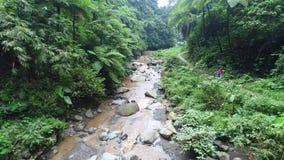 Aerial drone footage tropical river. Island Bali. Madakaripura Waterfall. East Java, Indonesia stock footage
