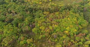Aerial Drone Footage View: Flight over autumn mountains with forests in sunrise soft light. stock footage