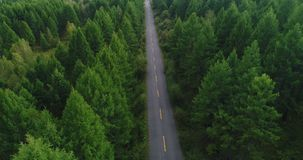 Aerial Drone Footage View: Flight over trail through autumn forests stock video