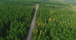 Aerial Drone Footage View: Flight over trail through autumn forests. stock video footage