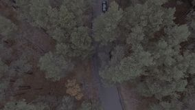 Aerial drone image of a forest in the Canadian wilderness. A serpentine road, barely visible from the overgrowth snakes. Through the trees. hd stock video footage