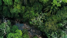 Aerial drone image of the rainforest and a small river at Amboro National Park, Bolivia stock photography