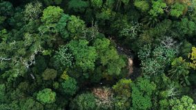 Aerial drone image of the rainforest and a small river at Amboro National Park, Bolivia.  stock photo