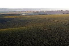 Aerial drone landscape with sunflower fields stock images