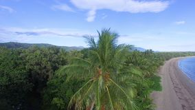 A tall palm tree in pivotal shot. An aerial drone pivotal shot of a palm tree located to a uninhabited island in Australia stock video footage