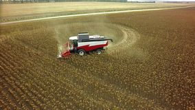 Aerial drone shot of a combine harvester working in a field. Tractors and farm machines harvesting corn in Autumn royalty free stock image
