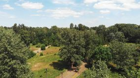 Aerial drone shot of green city park with big trees and tourist paths on sunny day with blue sky at horizon.  stock footage