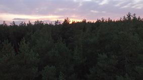 Aerial drone shot over the autumn coniferous deciduous forest on Sunset. 4K. Aerial drone shot over the autumn coniferous deciduous forest on the Sunset. Smooth stock footage
