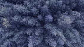 Aerial drone shot over blue Coniferous forest stock video footage