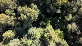 Aerial drone shot over the north european forest - fly over green trees. 4K stock video footage