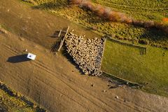 Aerial drone shot of sheep royalty free stock image