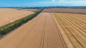 Aerial drone shot of a two combines harvesters working day in big a field. FHD. Aerial drone shot of a modern two combines harvesters working day in a big wheat stock video