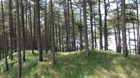 Aerial drone video moving towards conifer pine forest, camera moving towards grass hill